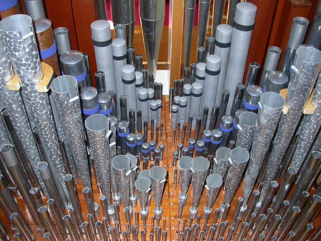 organ 008
